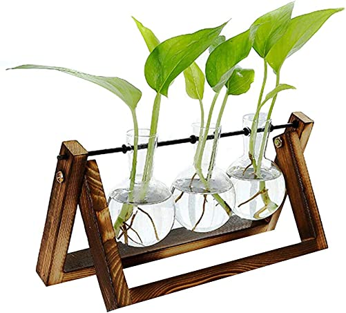 RollingBronze Hydroponic Glass pots,hydroponic Plants,Tabletop Plants,Hydroponic Glass Planter Bulb Vase with Wooden Stand Tray Tabletop Desk Decor