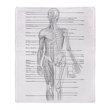 Amazon.com: CafePress - Human Anatomy Chart - Soft Fleece Throw ...