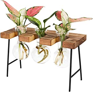 PAG Plant Terrariums Kit Tabletop Hydroponics Air Planter Holder with 3 Bulb Glass Vase and Mini Wood Bench Stand for Home Office Decoration