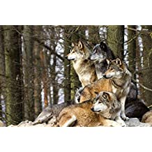 Wolf Pack - E - Art Print Poster,Wall Decor,Home Decor(24x16inches)