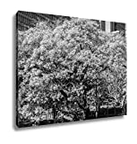 Ashley Canvas Blooming Jacaranda Trees In Johannesburg South Africa, Home Office, Ready to Hang, Black/White 20x25, AG5911840
