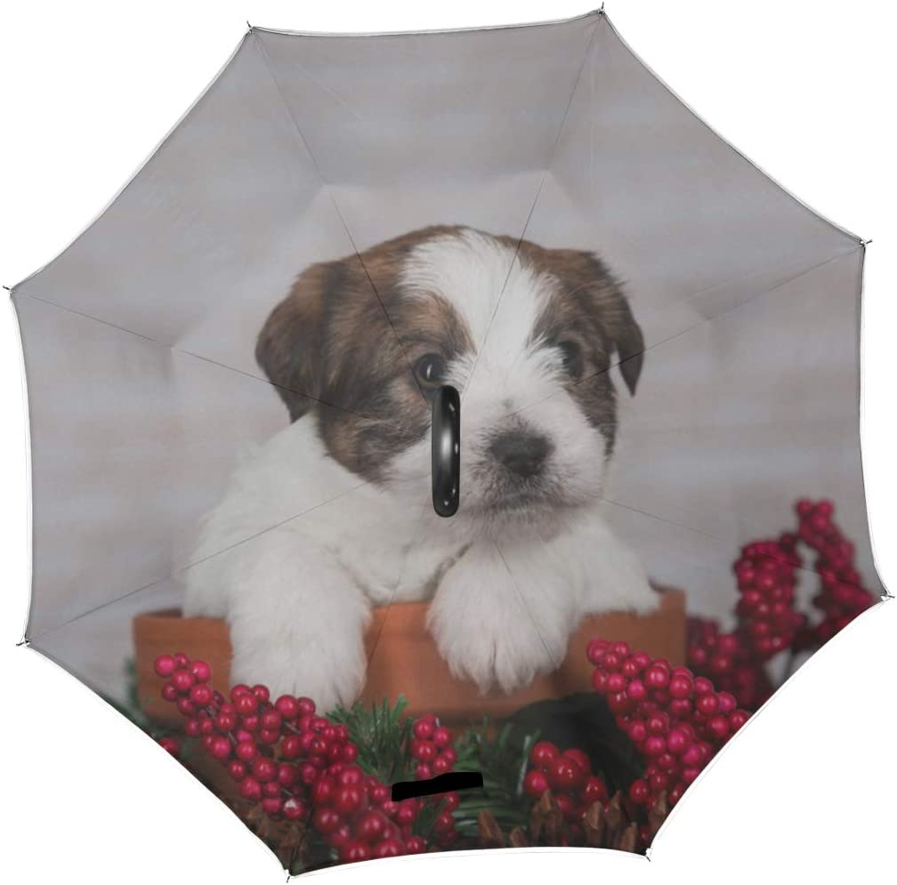 Double Layer Inverted Inverted Umbrella Is Light And Sturdy Portrait Puppy Jack Russell Terrier On Reverse Umbrella And Windproof Umbrella Edge Night