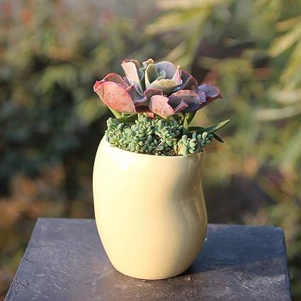 Amazon Com Rishx Succulents Pot Ceramic Small Yellow Bean Shaped Round Creative Mini Cute Flower Pot Succulent Planter Home Decoration Desktop Decorative Crafts Garden Outdoor