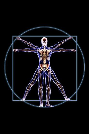 Amazon Vitruvian Man Skeleton Anatomy X Ray Photo Art Print