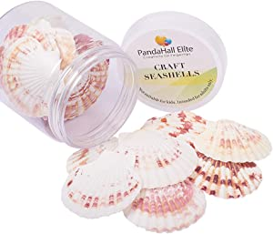 PH PandaHall 1Box (About 22pcs) Scallop Sea Shells Seashells Charms for Craft Making, Home Decoration, Beach Party, Fish Tank and Vase Fillers (Light)