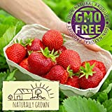 Stargazer Perennials 20 Earliglow Strawberry Plants Organic Grown Bare Root Crowns | Sweet June Bearing Fruit Non GMO | Easy To Grow