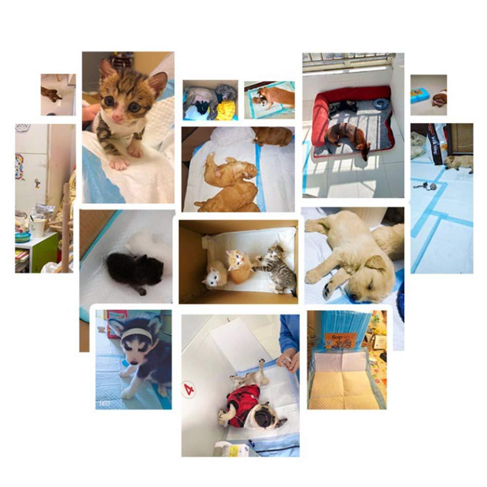 WXLJJYPD Empapadores para Entrenar A Cachorros Superabsorbente Toallitas de Entrenamiento para Mascotas Inodoro Entrenamiento Pad,XL