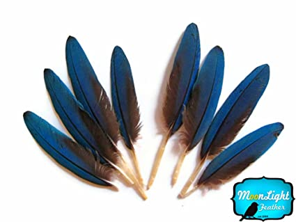 moonlight feather macaw feathers small blue