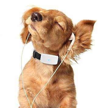 Hangang Mini localizador GPS, GPS perro, localizador GPS perro gato animal real time Tracking