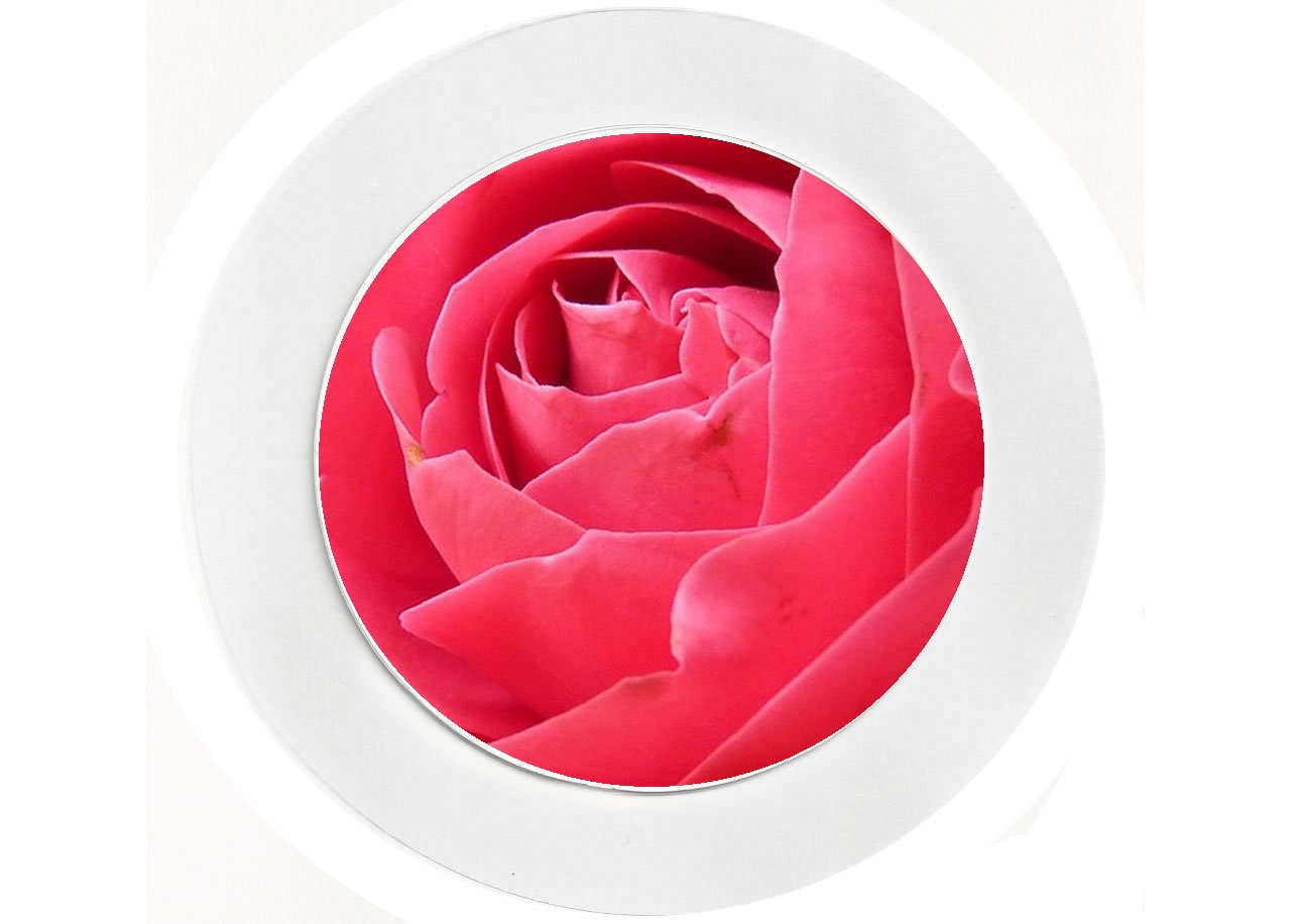Fun Reuseable Flowers Pink Rose Car Tax Disc Holder