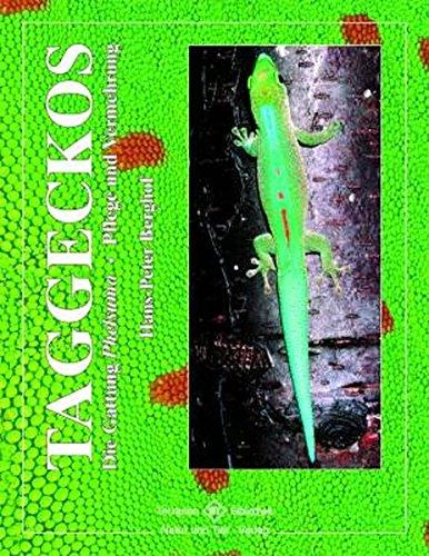 taggeckos-die-gattung-phelsuma-terrarien-bibliothek