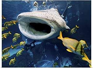 "GREATBIGCANVAS Whale Shark in Captivity Poster Print, 40""x30"""