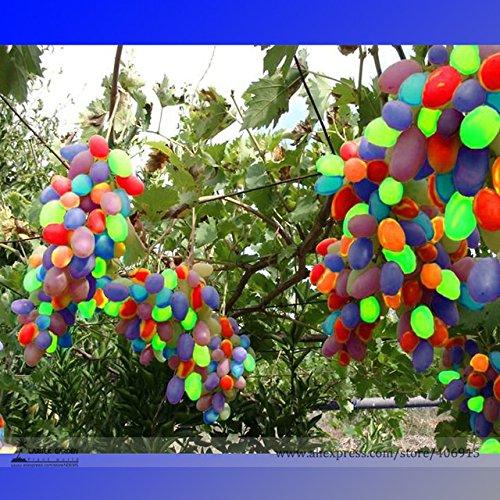 grape seedlings - 1