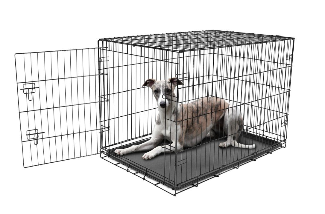 Carlson Pet Products Secure and Foldable Single Door Metal Dog Crate, Large by Carlson Pet Products