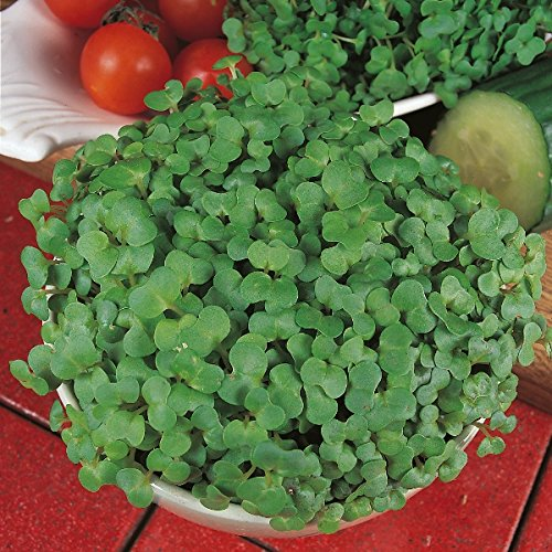 Suffolk Herbs - Organic Mustard Fine White - 2000 ()