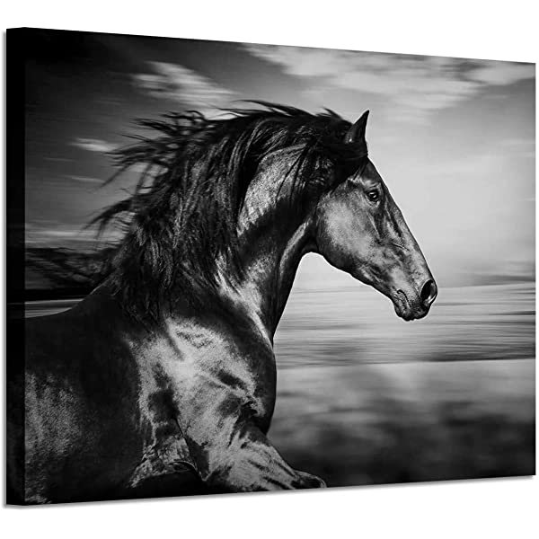Amazon Com Horse Picture Animal Art Prints Wild Black Stallion Graphic Artwork On Canvas For Walls 36 W X 24 H Multi Sized Posters Prints