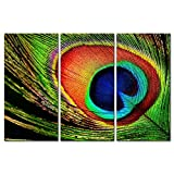3 Pieces Modern Canvas Painting Wall Art The Picture For Home Decoration Closeup Beautiful Peacock Feathers Feather Still Life Print On Canvas Giclee Artwork For Wall Decor Picture