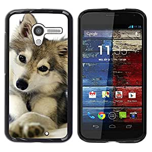 PC/Aluminum Funda Carcasa protectora para Motorola Moto X 1 1st GEN I XT1058 XT1053 XT1052 XT1056 XT1060 XT1055 cute puppy wolf snow winter pet canine / JUSTGO PHONE PROTECTOR
