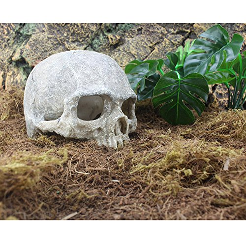 Pansupply New Aquarium decoration trunk halloween resin skull for fish tank decoration resin ornaments - Leo Lionni Costumes