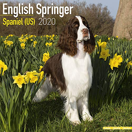 English Springer Spaniel Calendar 2020 - Dog Breed Calendar - Wall Calendar 2019-2020