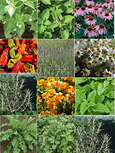 6000 Seeds (David's Garden Seeds Herb Medicinal Seed Collection HSM876 (Multi) 6000 plus Seeds (Open Pollinated, Organic))