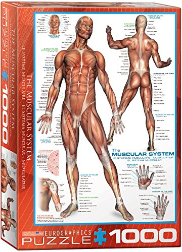 EuroGraphics Muscular System Puzzle (1000-Piece)
