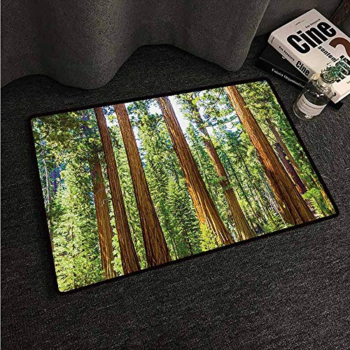 - HCCJLCKS Interior Door mat National Parks Up View of Tree Branches in Scenic Springtime Conifers Sequoia Art Prints Super Absorbent mud W24 xL35 Green Brown