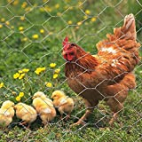 MTB Galvanized Hexagonal Poultry Netting Chicken