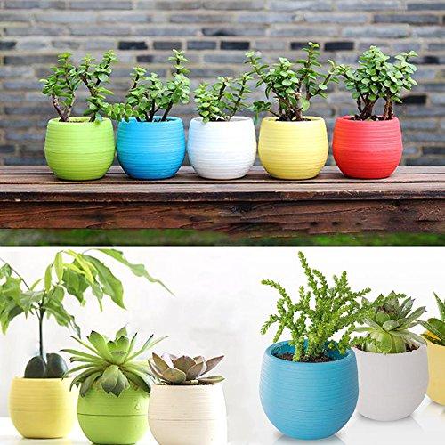 Mimgo Store Colourful Plastic Planter product image