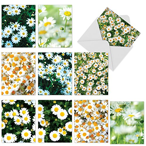 M6031 Oopsy Daisies: 10 Assorted Blank All-Occasion Note Cards Feature Fields of Sunny Bright Daisies, w/White Envelopes.