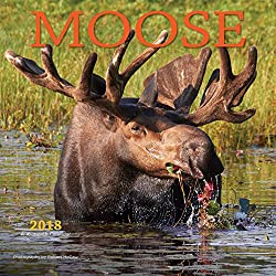 Moose 2018 12 x 12 Inch Monthly Square Wall Calendar by Wyman, Wildlife Animals Hunting