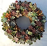 "Succulent Living Wreath Planted on 9"" Diameter Base - 11"" Diameter with Plants"