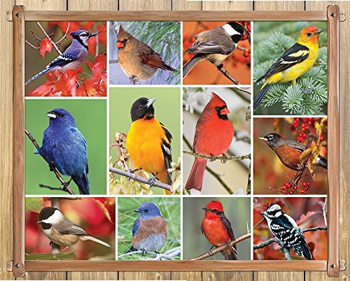 Springbok Alzheimer & Dementia Jigsaw Puzzles - Songbirds - 100 Piece Jigsaw Puzzle - Large 23.5 Inches by 18 Inches Puzzle - Made in USA - Extra Large Easy Grip Pieces -