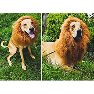 Zuozee Halloween Costume for Dogs,Lion Mane Costume with Ears,Dog Costumes Fancy Hair,Lion Wig with Tail for Pets Christmas Holiday