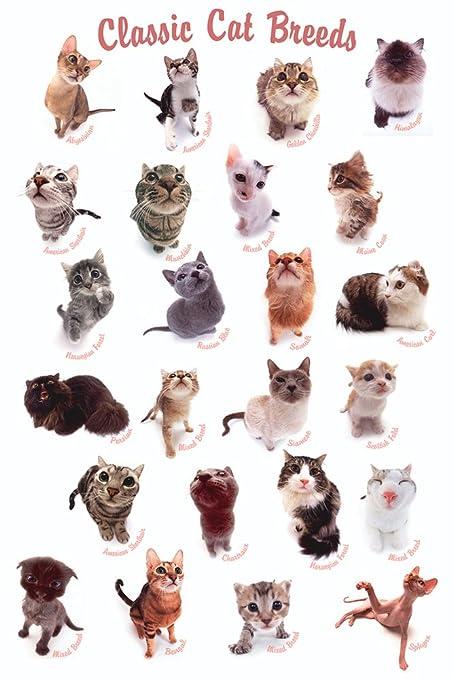 Gatos Póster Classic Cat Razas de perros (Incluye Artículo ...