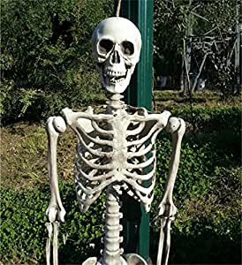 Abrante 5.4FT Halloween Full Body Skeleton With Movable Limbs For Halloween Decoration