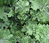 Siberian Kale- Organic Heirloom Variety- 500+ 2019 Seeds by Ohio Heirloom Seeds