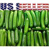 30+ ORGANICALLY GROWN Persian Beit Alpha Cucumber Seeds Heirloom NON-GMO Crispy!