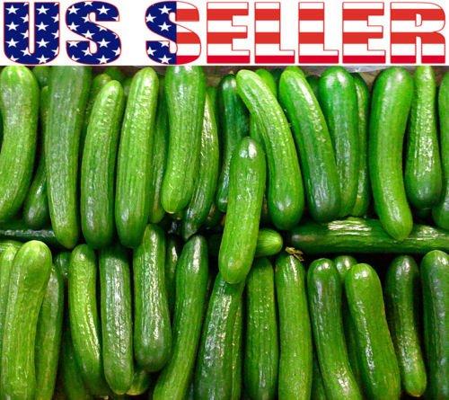 30+ ORGANICALLY GROWN Persian Beit Alpha Cucumber Seeds Heirloom NON-GMO Crispy ()