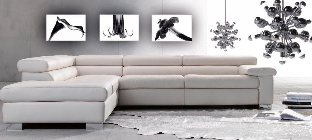 Fotoatelier Dirk Haas Premium Pared Imágenes XXL – Natural imágenes – – imágenes Flores Fotos – Imágenes – Negro – Blanco – Trompeta Planta – Flores (fah71hdr) 503422