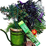 All Natural Mosquito Repellent Incense Sticks. Double Strength. Potent 20% mix of Citronella, Lemongrass, Neem and Cinnamon plant oils. Great aroma! DEET free bug repeller by Vibrant Essence