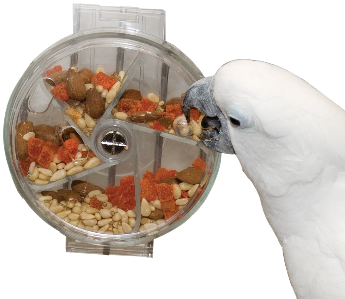 Paradise Toys Bird Creative Foraging System Wheel, Spins with Food Inside, 6'' Diameter by Paradise Toys