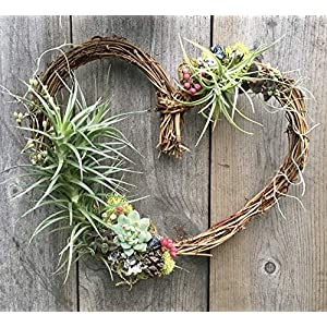 Living Succulent Air Plant Heart Wreath 87