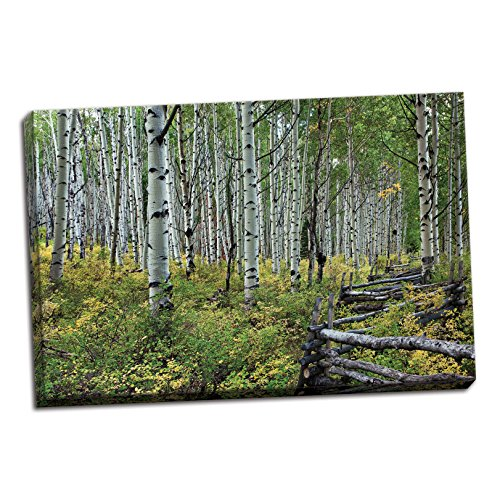 Gango Home Décor Aspen Grove II, Fine Art Photograph by: Larry Malvin; One 36x24in Hand-Stretched Canvas (Aspen Fine Grove Art)