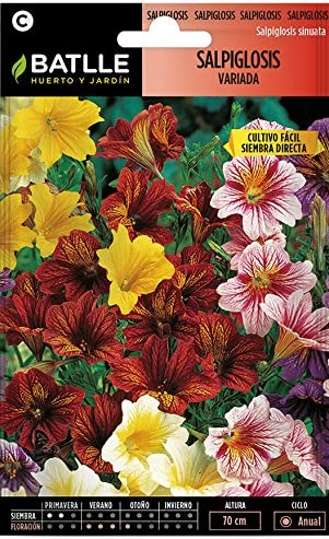 Semillas de Flores - Salpiglosis variada - Batlle: Amazon.es: Jardín