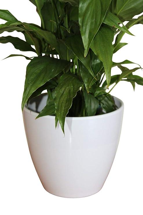 Piante Da Appartamento Amazon.Qualita Medio Bianco Plastica Vaso Rigid Cover Ideale Per Piante