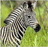 Stick It On Your Wall Baby Animals - Baby Zebra Mini Poster - 40x40cm