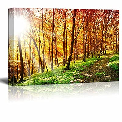 Canvas Prints Wall Art - Beautiful Scenery of Sun Ray in The Forest in Autumn | Modern Wall Decor/Home Art Stretched Gallery Canvas Wraps Giclee Print & Ready to Hang - 12