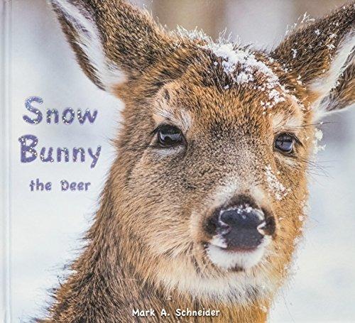 Snow Bunny Bronzer - 9