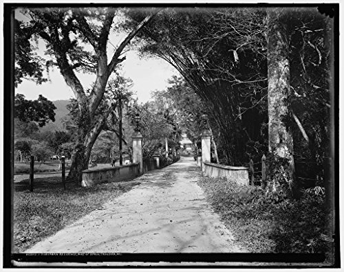 Vintography 24 x 30 Giclee Unframed Photo A Suburban Residence Port Spain Trinidad W I 1901 Detriot Publishing co. 89a by Vintography